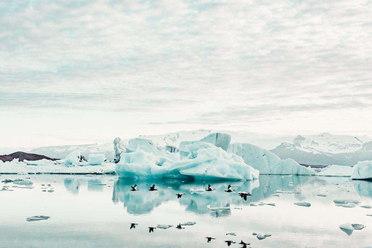 Iceland, Birds, Glacier