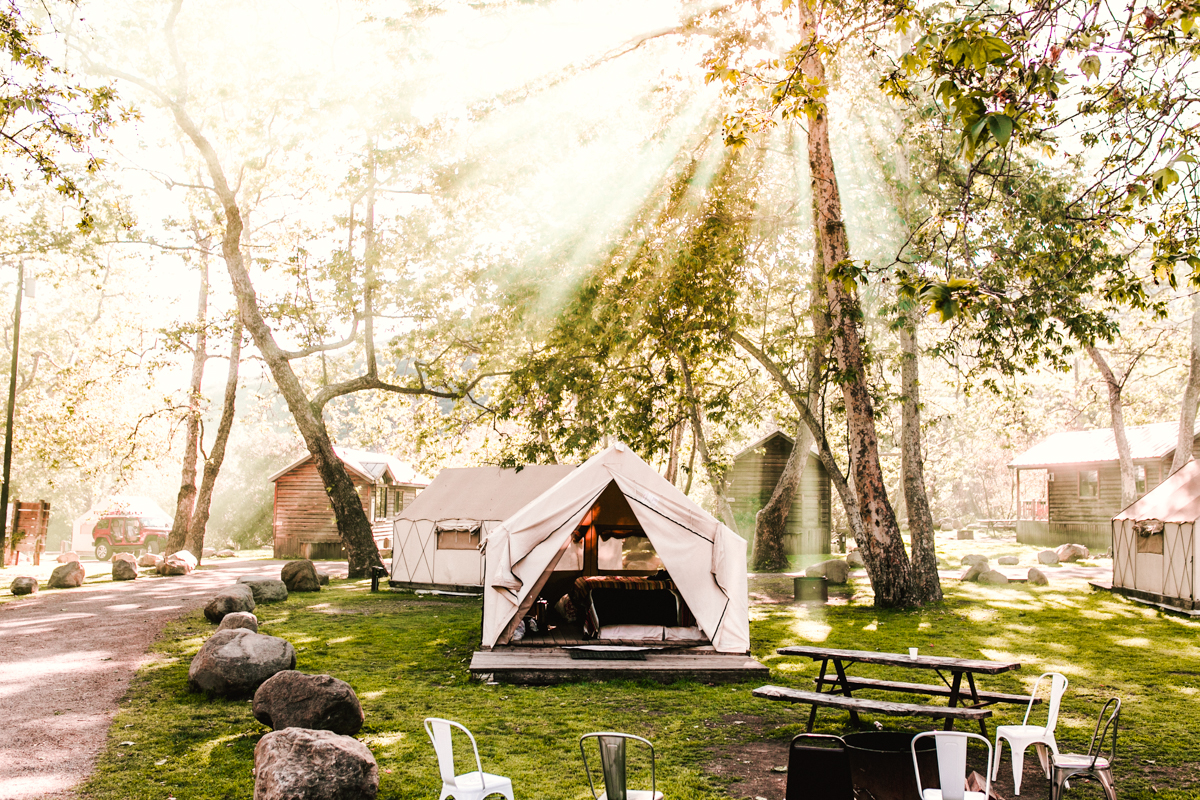 camping, tent, trees