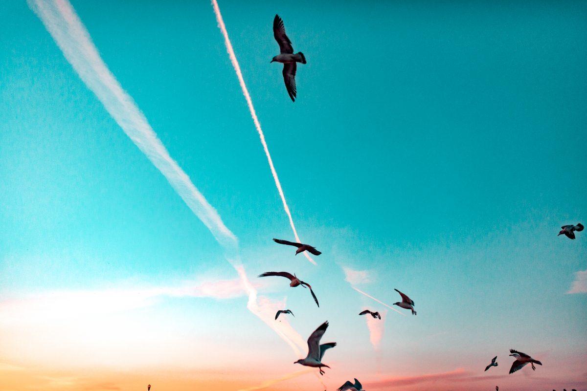 Sunset, Birds, Color