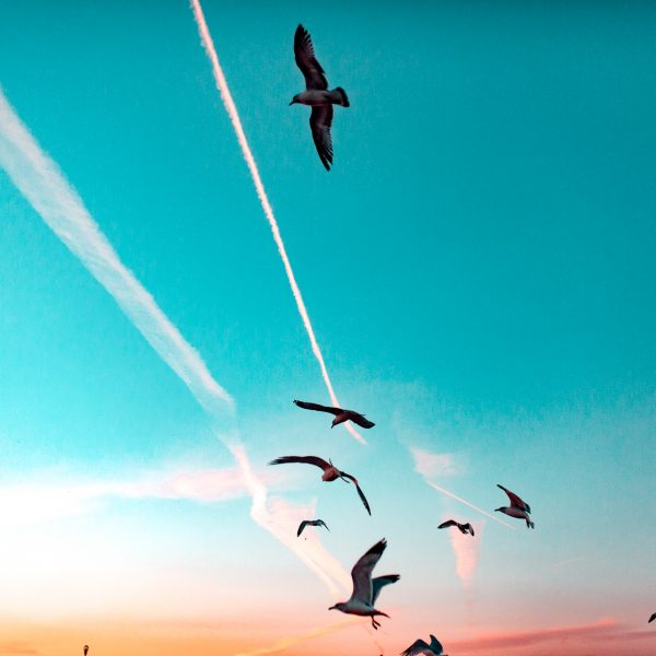 Sunset, Birds, Color